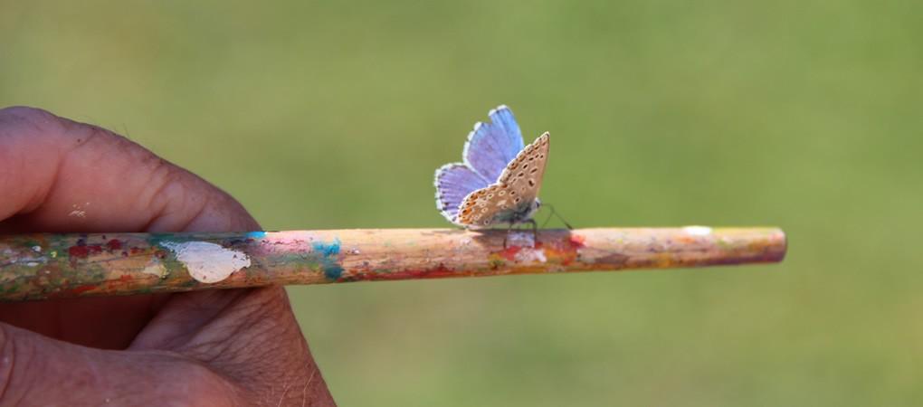 Kunstzinnig dynamisch coachen vlinder